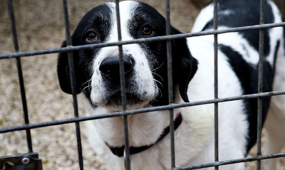 Abgabeanfragen haben sich bei Hunden verdreifacht